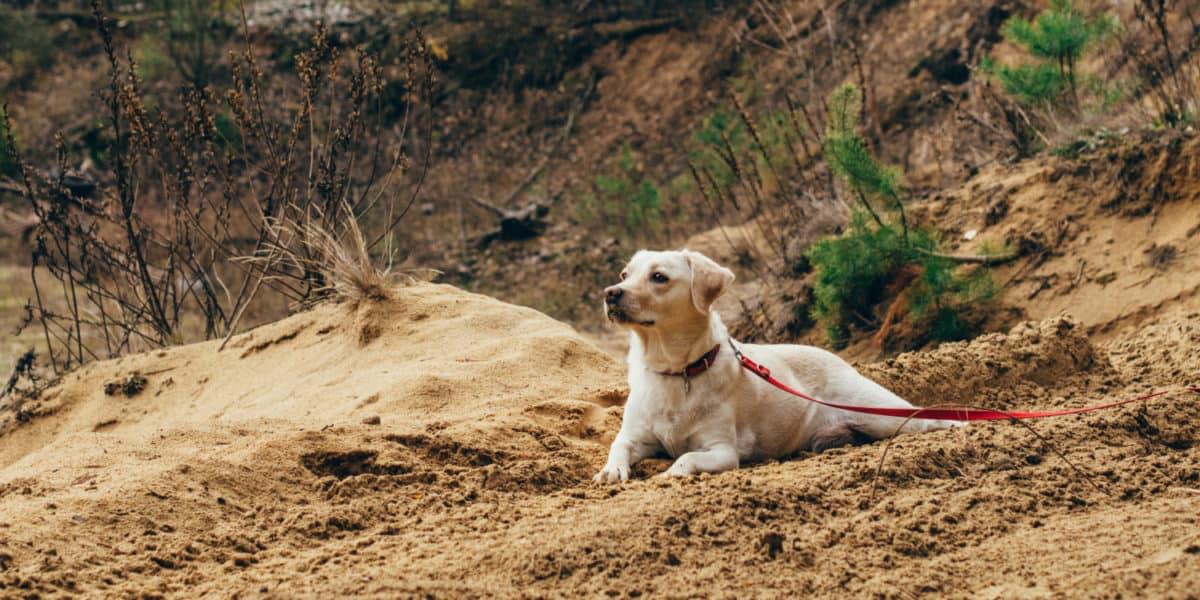 Die richtige Leine für den Hund