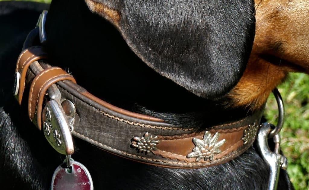 Breites Lederhalsband