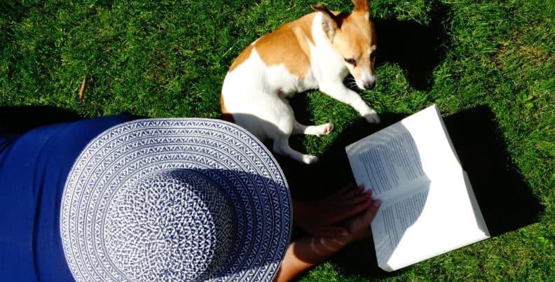 Hund lernt in der Hundeschule