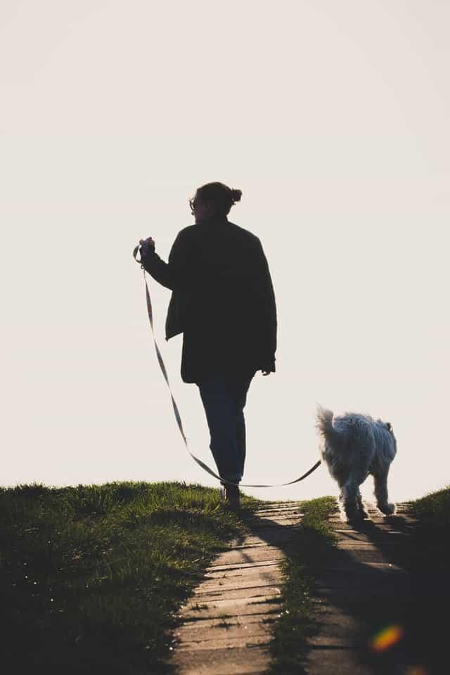 Leinenführigkeit: Hund läuft an der lockeren Leine