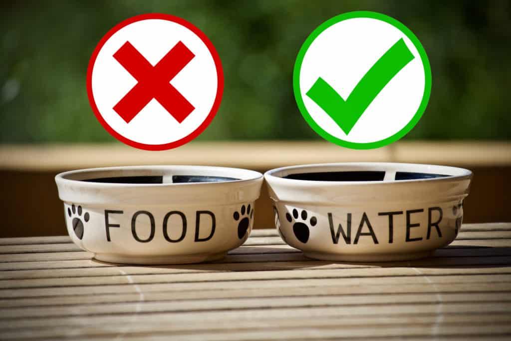 24h Diät: Kein Futter, aber immer frisches Wasser!