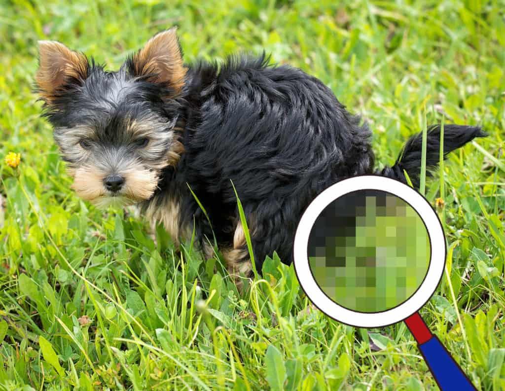Durchfall beim Hund: Kot untersuchen