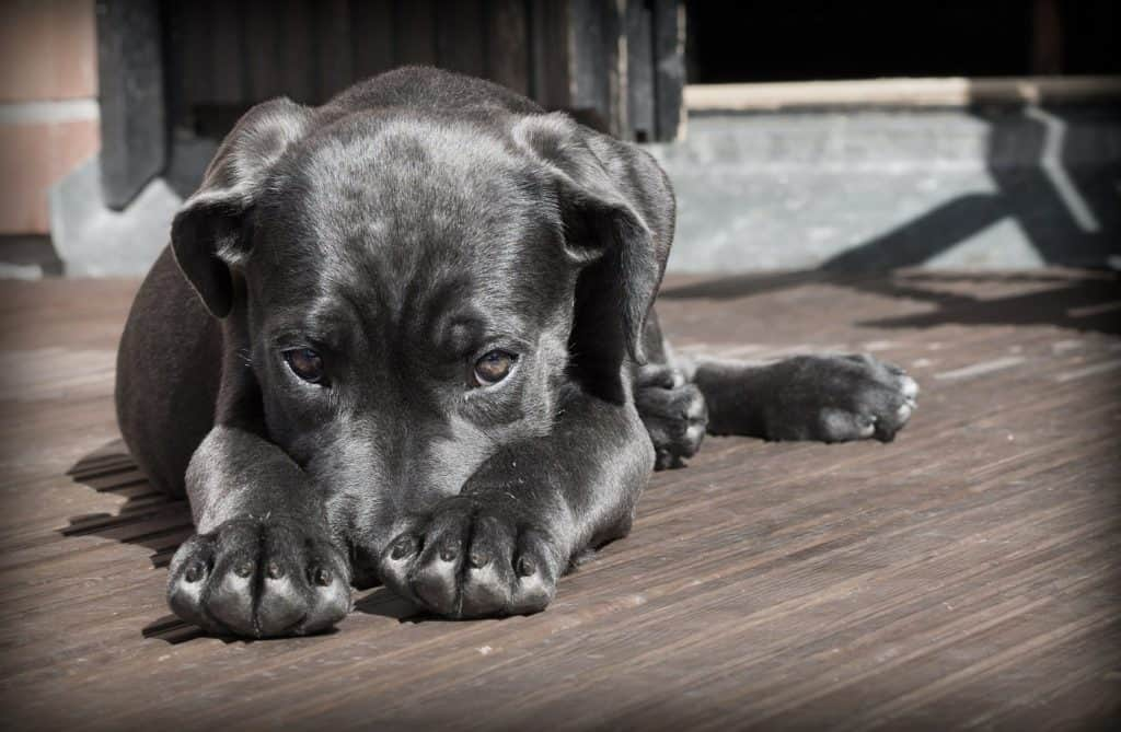 Dein Hund wirkt etwas schlapper als sonst? :(