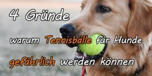 Warum Tennisbälle für Hunde gefährlich sind